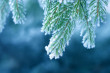 stock-photo-1272716-frost-on-pine