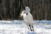 3940606-skipping-white-horse-on-a-background-of-a-wood