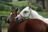 4361976-horses.jpg 2