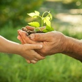 11870363-hands-of-elderly-man-and-baby-holding-a-young-plant-against-a-green-natural-background-in-spring-eco