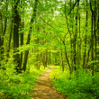 stock-photo-16634815-forest-path