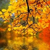 643820-in-this-photo-the-beautiful-autumn-wood-is-shown
