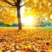 10243412-colorful-autumn