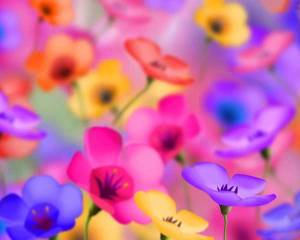 cool-colorful-flower-for-fb-profile-pics-2-a6850