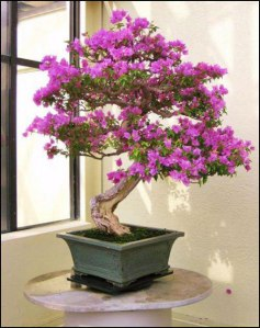 nice-cute-bonsai-trees-images-for-google-plus-2-dd805