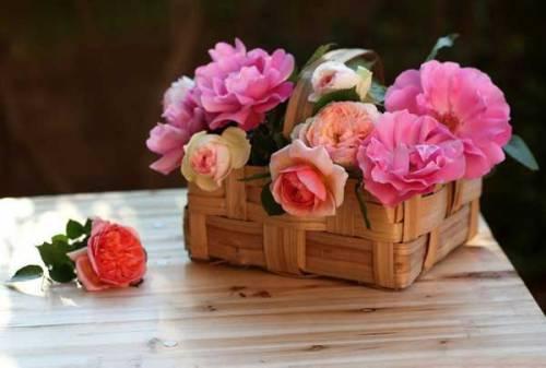 nice-flower-basket-images-for-google-plus-3-f669d
