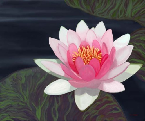 nice-waterlily-picture-for-facebook-profile-3-4a7f8