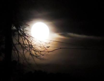 Ellen's moon