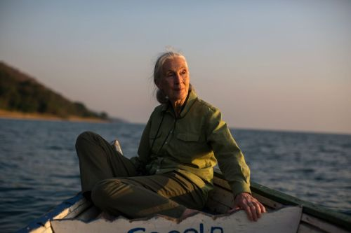 Michael-Christopher-Brown-Magnum-Photos-2 Jane Goodall